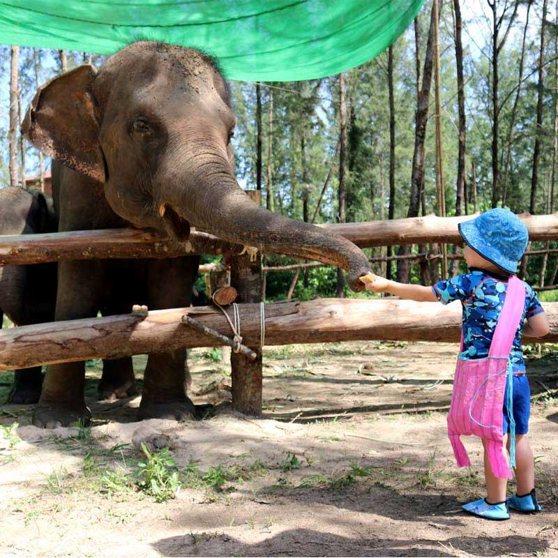 Kid feeding elephant