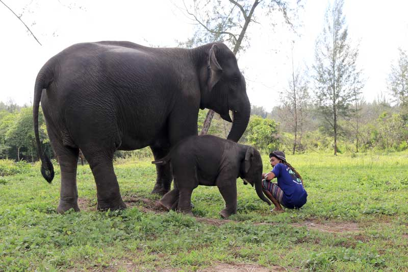 Koyah with her mahout